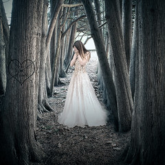 heartbreak (sherriscarano) Tags: trees love pain sad cedar conceptual heartbroken