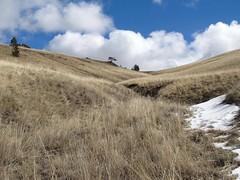 Tri-Color.  Montana (montanatom1950) Tags: grass clouds scenery montana hiking scenic bluesky helenamontana