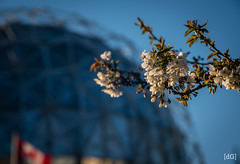 Spring at Science World (Daniel's Clicks) Tags: