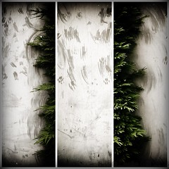 On the Fringe (lesliegill) Tags: colour green japan outdoors grey tokyo spring triptych aoyama iphone 2016 iphoneography