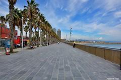 Passeig Maritim. (Howard P. Kepa) Tags: barcelona palmeras personas paseo barceloneta cataluña