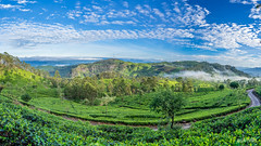 Panoramic View from Lipton's Seat - Haputale, Sri Lanka.jpg (SWTRIPS) Tags: green landscape tea seat roadtrip sri lanka plantation srilanka teaplantation liptons liptonsseat swtrips