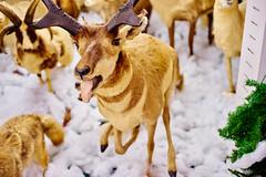 Rabid Animals (FunkadelicSam) Tags: art animals tongue photography crazy hilarious stuffed model thing