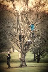 tree climbing fun........ from Sunday workshop north-west London (dtapkir) Tags: uk blue light england people tree green london boys colors sunshine yellow kids contrast garden fun gold haze nikon pattern child outdoor young d750 golders 80400