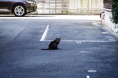 Today's Cat@2016-04-19 (masatsu) Tags: cat pentax osaka cc100 catspotting mx1 thebiggestgroupwithonlycats