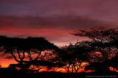 Lake Ndutu Sunrise (charbonjoh) Tags: naturemasterclass