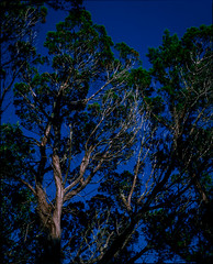 Trees, Balcones Canyonlands Wildlife Preserve, Texas (nsandin88) Tags: park trees wild sky color 120 mamiya film nature mediumformat texas fuji natural velvia canyonlands epson fujifilm exploration preserve e6 manualfocus balcones rz67 velvia50 fujivelvia mamiyarz67 developedathome v850