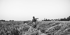 Life in Nemam (anandgovindan) Tags: travel portrait people blackandwhite india white black nature monochrome field lines contrast canon landscape blackwhite village rice paddy horizon fineart farming performingarts highcontrast wideangle line tokina portraiture highkey farmer chennai f28 ricepaddy tamilnadu panaroma paddyfield southindia cwc environmentalportrait ultrawideangle 600d nemam thiruvallur tiruvallur 1116mm tokina1116mm canon600d chennaiweekendclickers anandgoviphotography anandgovindan cwc524