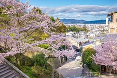 (Richie.) Tags: japan kyoto