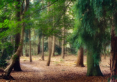 The 'wood'be background. (jinterwas) Tags: wood trees tree green netherlands forest landscape bomen woods groen outdoor background nederland free cc creativecommons bos buiten landschap leersum achtergrond freetouse