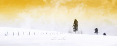 into white (poudrerie) (patrice ouellet (OFF)) Tags: winter white snow landscape hiver poudrerie patricephotographiste