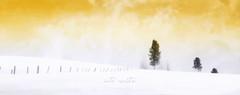into white (poudrerie) (patrice ouellet) Tags: winter white snow landscape hiver poudrerie patricephotographiste