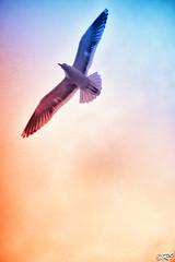 Libert (Ghoul-Seine) Tags: bird freedom sony libert oiseau rx100 ghoulseine ramjanally dscrx100 sonydscrx100