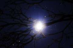 Moonlight and glitter (taylormariephotographyreno) Tags: blue trees sky moon nature beautiful glitter night stars outside space astro galaxy astrophotography midnight hippie moonlight sparkly cosmic