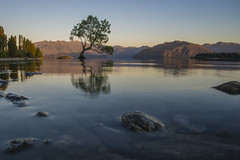 How low can you go? (Ian@NZFlickr) Tags: lake reflection island still waves no south low tripod calm nz below viewpoint wanaka height thatwanakatree