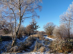 Winter Skizze : Januar 2016 (swetlanahasenjäger) Tags: winter januar greifswald mecklenburgvorpommern deutschland bench monday saariysqualitypictures coth coth5 ngc sunrays5 npc esenciadelanaturaleza worldwidelandscapes contactgroups greatshotss photosandcalendar thebestofmimamorsgroups flickrsportal theoriginalgoldseal