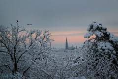 Snowscape (luz.marsen) Tags: pink trees winter sunset white snow cold tree ice sunrise munich frozen flying cityscape outdoor crow crows snowscape heiligkreuzkirche obergiesing