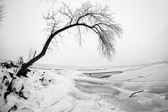 Lines & Curves - Lake Mendota (_Sharkey_) Tags: winter snow ice fog blackwhite haze frost madison wi icicles lakemendota linescurves frautschipoint january2016 bwcritiquegroup copyrightsharkeyplender2016