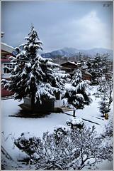 IMG_1881 (eminkoyuncu) Tags: winter snow nature