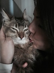 He pretends he doesn't like kisses (Kenster79) Tags: cute cat kitten pussy kisses meow pussycat