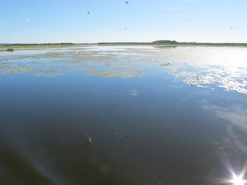 2010 07 08 Polonia - Warmia Masuria - Elblag - Il Canale - Jez Druzno - Lago Druzno - Area protetta_0913