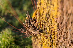 Animal? (Lucien Schilling) Tags: plant tree green nature insect arbre cadzandbad