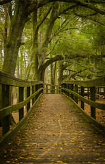 The Naturewalk (sugarhouse2) Tags: wood trees green nature leaves georgia woods walk boardwalk serine