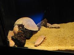 Sunshine Aquarium (Laika ac) Tags: japan aquarium tokyo ikebukuro isopod sunshinecity sunshineaquarium