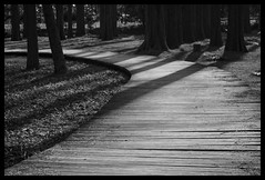 Pathway (hej_pk / Philip) Tags: vinter woods path sony m42 zenit pathway kwangju helios helios44m gwangju vaeg sydkorea a5000 helios44m258