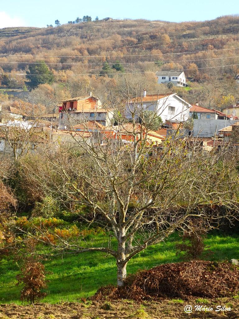 Águas Frias (Chaves) - ... vista da Aldeia por entre as árvores ...