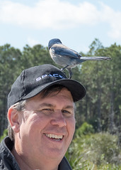 IMG_3549 (Bill Jelen) Tags: birding scrubjay rockledge