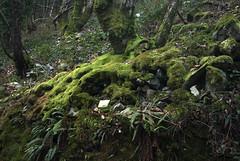 moss   stones (Vanessa RG (Vanessa Valkyria)) Tags: trees musgo nature forest woodland moss woods stones bosque piedras