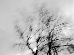 Storm (Italian Film Photography) Tags: trees storm blur film lines analog blackwhite movement long exposure outdoor shapes minimal movimento ilford fp4 largeformat biancoenero analogica rami graflex tempesta linee pellicola