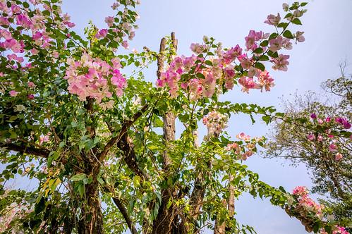 @ Wat Phra That Soi Suthep
