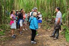 Hiking with Road Scholar, Trail, Arenal Volcano, Costa Rica IMG_0894 (Hart Walter) Tags: rainforest birdwatching fortuna socialflycatcher iguanas epiphytes euphonia tropicalforest arenalvolcano costaricanature swalowtailedkite paraisoresort misticohangingbridgespark