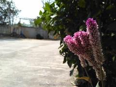 Redmi 3 images pictures Redmi 3 Mini