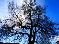 DSC00602 (omirou56) Tags: sky tree clouds outdoor greece platanus 43      sonydscwx500