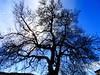 Νεγαδες Ζαγορι DSC00602 (omirou56) Tags: sky tree clouds outdoor greece platanus 43 ελλαδα δεντρο συννεφα ουρανοσ ζαγορι sonydscwx500