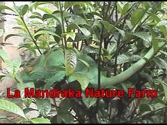 Iguanas, Millipedes & Bats, Madaga