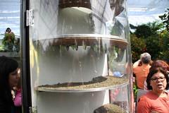 IMG_2443 (Mercar) Tags: canada butterfly garden botanical montreal go butterflies jardin free greenhouse botanic botaanikaaed qubeck