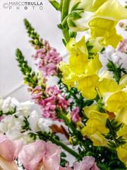 Flowers (Ragnarøkkr) Tags: flower hdr flowerphotography hdrphotography theenchantedcarousel luminancehdr