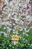 cat danboard (beelan_73) Tags: flowers toys sakura danboard
