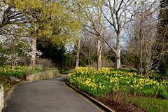 Spring Flowers (cotarr) Tags: leica spring geotag chicagobotanicgarden sensorygarden topazdenoise topazdetail cbgscene iphonemytracks vlux114 cc2015