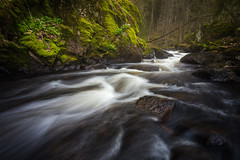 Forest Stream (Arvid Bjrkqvist) Tags: flowers mist motion water grass rock fog forest river flow moss stream mood sweden