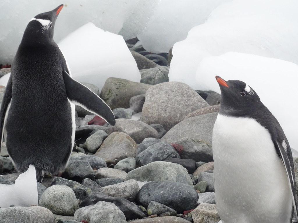 John Newby, Author at Swoop Antarctica Blog