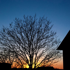 Blueshift (Arni J.M.) Tags: blue sky orange sun house tree silhouette yellow evening iceland dusk branches silhouettes reykjavik trunk arteries ísland blueshift