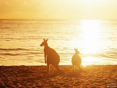 Murramarang National Park. South Coast NSW Australia (P4230750) (colourbycodes) Tags: ocean nature animals australia nsw beaches eurobodalla