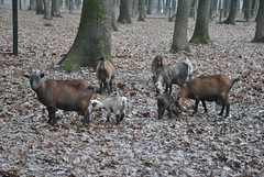 DSC_0037 (Rinswid) Tags: park nature animal spring kharkov feldman ecopark