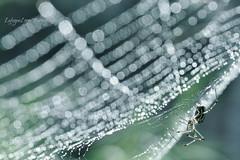 Site of creation (HoustonHVAC170) Tags: life macro net nature water beautiful rain garden spider droplets nikon nest live web style photograph lafugue