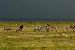 Ngorongoro Crater (charbonjoh) Tags: autofocus naturemasterclass